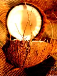Coconut_art_06_wiki_Nicolai-Schfer.jpg