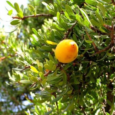 Argan (Huile végétale), 50ml