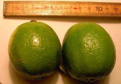 Citron vert ou Limette (Huile essentielle), 5 ml