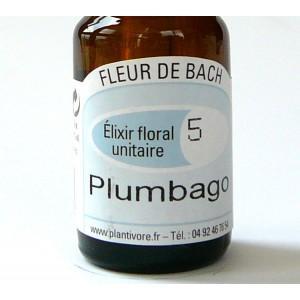 Unitaire n° 05 : Plumbago (Cerato), 10 ml, Hautes-Alpes, BIO