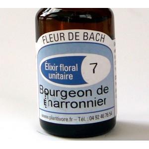 Unitaire n° 07 : Bourgeon de marronnier (Chestnut Bud), 10 ml, Hautes-Alpes, BIO