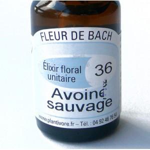 Unitaire n° 36 : Avoine sauvage (Wild oat), 10 ml, Hautes-Alpes, BIO