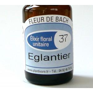 Unitaire n° 37 : Eglantier (Wild rose), 10 ml, Hautes-Alpes, BIO