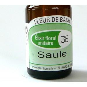 Unitaire n° 38 : Saule ( Willow), 10 ml, Hautes-Alpes, BIO