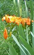 fleur-de-teint.jpg