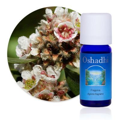 Fragonia sauvage (Huile essentielle), 3 ml