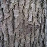 Camphrier Bois (Huile essentielle), CT Bornéone (Camphre) 10 ml