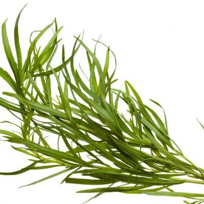 Estragon (Huile essentielle), 10 ml