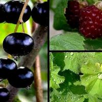 menolys-plantes.jpg